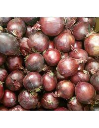 Oignon rouge vrac Origine France