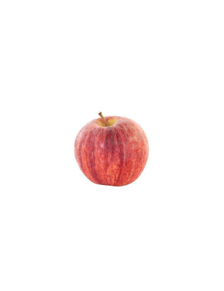 Pomme Gala