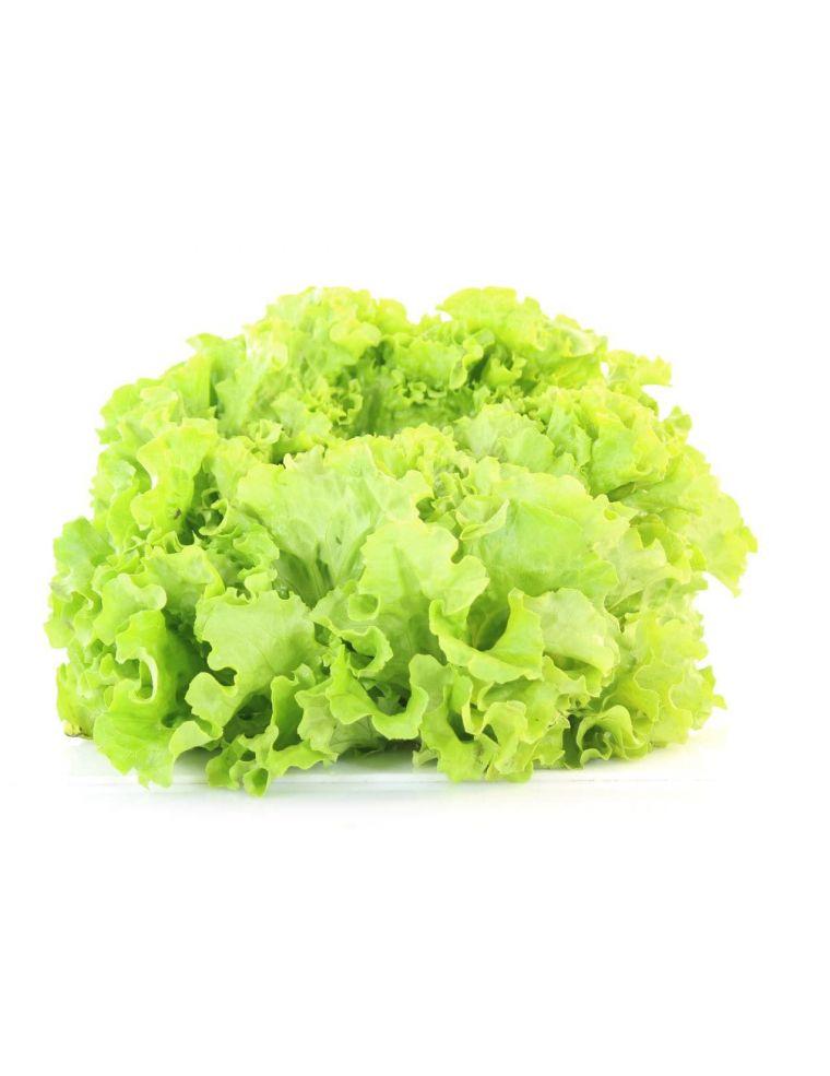 Salade Batavia Blonde BIO