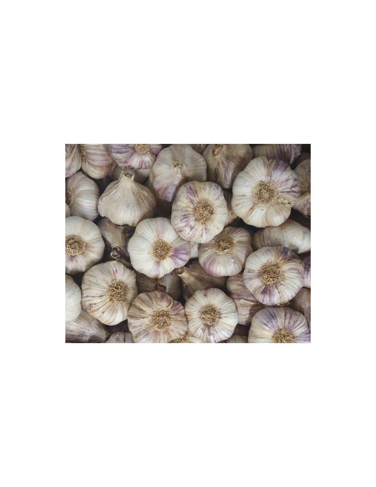 ail violet vrac 500 g origine France Jemangefrancais.com